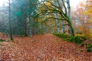 Auvergne_15
